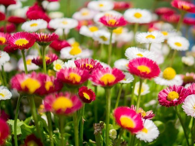 Telek virágokkal